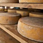 Malga ricotta and cheeses